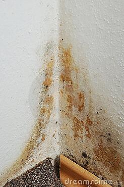 Insure your home and protect your safety from mold and other property damage with insurance from Andrew Gordon Inc