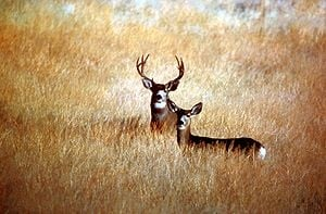 Avoid automobile accidents with deer and other animals with this auto information from Gordon Insurance