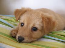 Protect your beloved pets with these tips and insurance from andrew gordon inc norwell ma