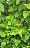 Stay healthy and away from poison ivy get health life insurance from andrew g gordon inc