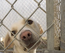 Keep animals safe volunteer and get personal from andrew g gordon inc