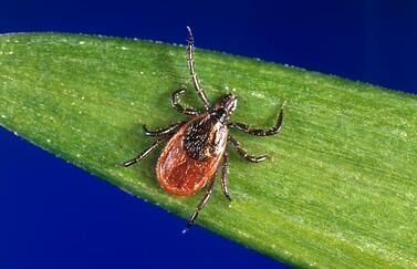 Protect yourself from tick diseases with life health insurance from andrew g gordon inc