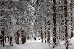 Have a safe winter with personal insurance from Andrew G gordon inc