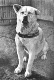 Hachiko: a dog's tale, via wikipedia