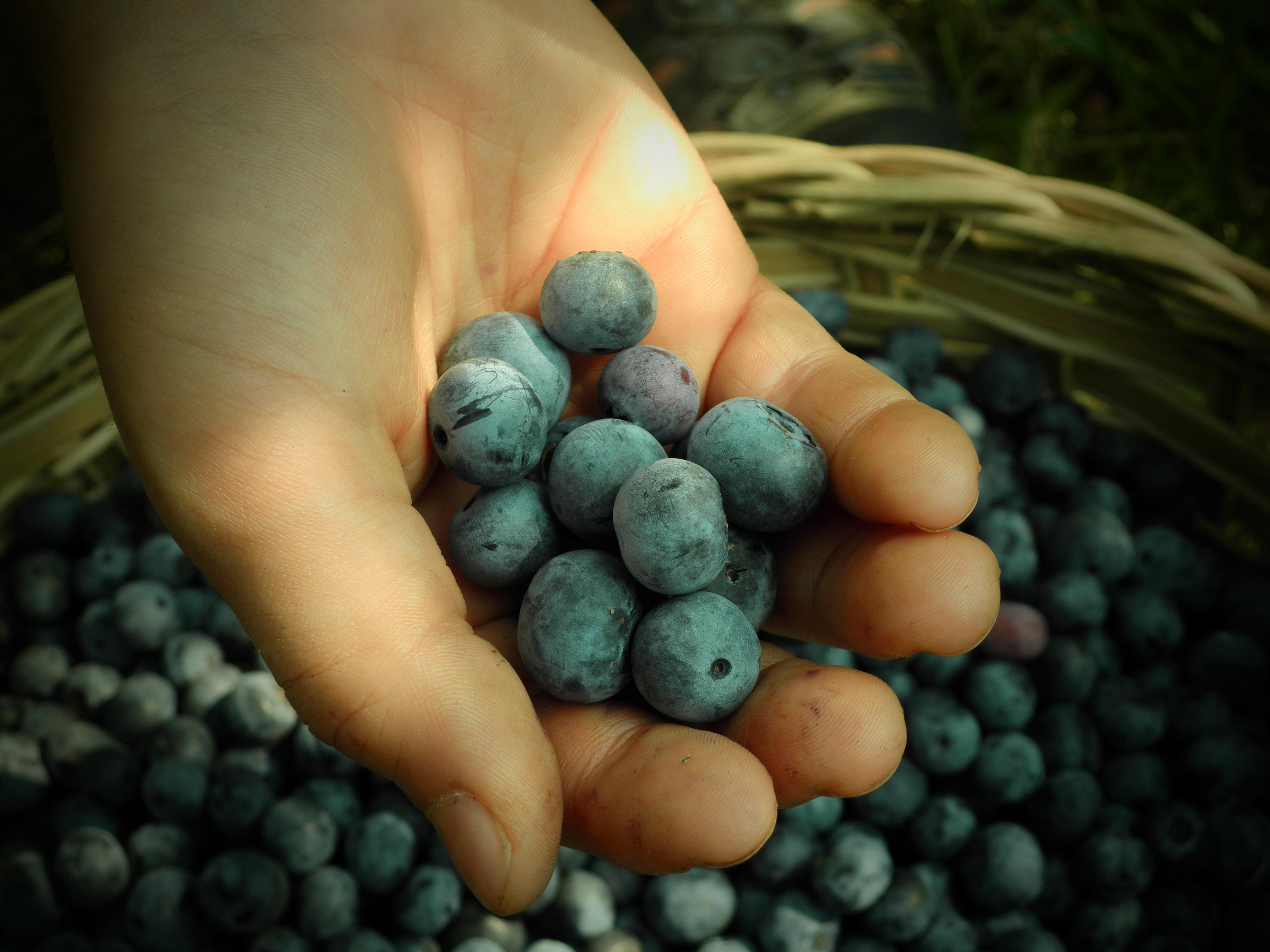 Blueberry_zucchini_bread_recipe_from_Andrew_G_Gordon_Inc_Insurance