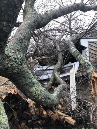 House damaged by tree-927040-edited.jpg